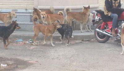وسط تجاهل الحوثيين.. المواطنون في صنعاء يشكون من انتشار الكلاب الضالة