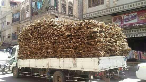 انتعاش تجارة الحطب جراء استمرار أزمة الغاز المنزلي في العاصمة صنعاء (صور)