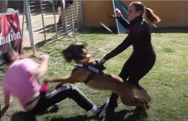 اسبانيات يواجهن العنف الأسري بالكلاب المدربة