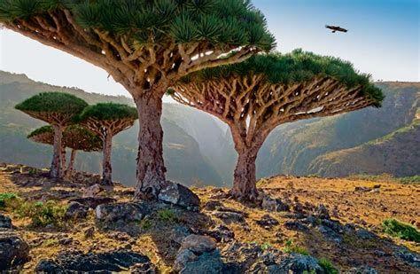 الحكومة تؤكد إبقاء سقطرى ضمن التراث العالمي