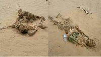 فضائح مليشيا الحوثي العنصرية.. تمييز طائفي يطال الجثث والمئات منها تحللت في الصحاري وسفوح الجبال