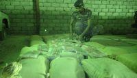 """""""أمن مأرب"""" يضبط كميات كبيرة من الحشيش كانت في طريقها إلى الحوثيين بصنعاء"""
